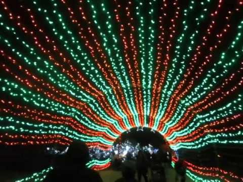 Wild Lights , The Living Desert 2014