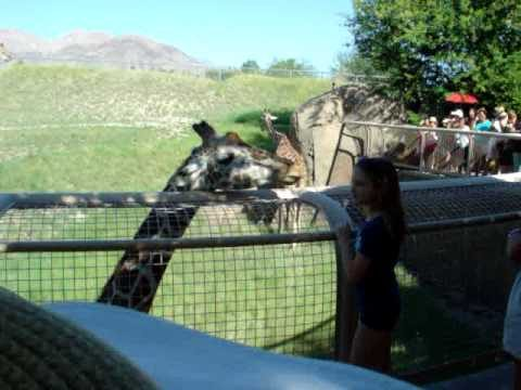 Popular Videos – Living Desert Zoo and Gardens & Palm Desert