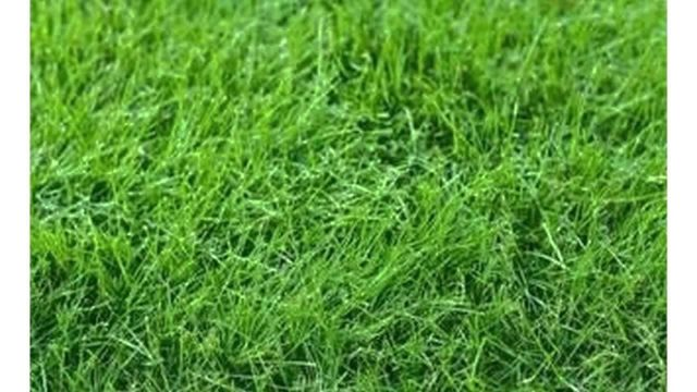 Difference Between Bermuda Grass and Fescue Grass
