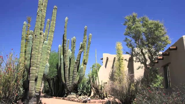 A Moment in Time: Desert Botanical Garden