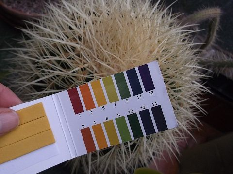 The correct Ph of water for your Cacti & Succulent Plants + How to test