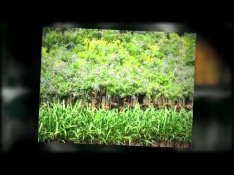 Arizona Wholesale Nursery – Wholesale Grower Of Plants