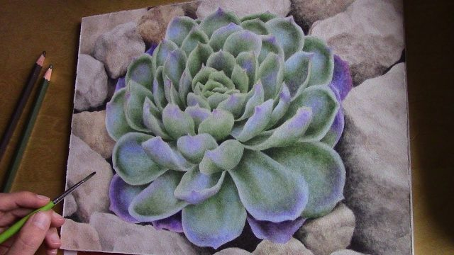 drawing a desert plant with watercolor pencils