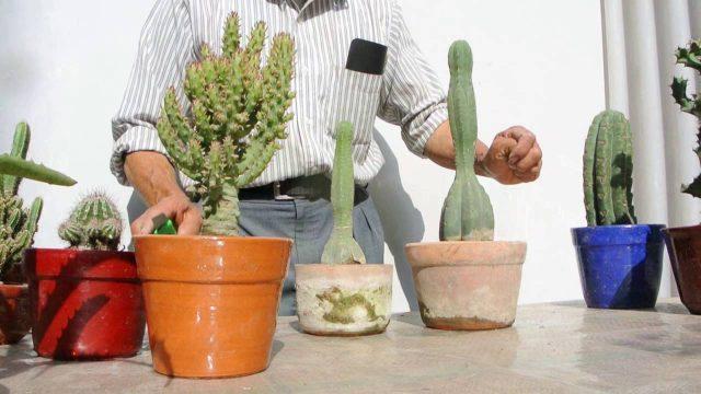 Reproduccion de cactus   1