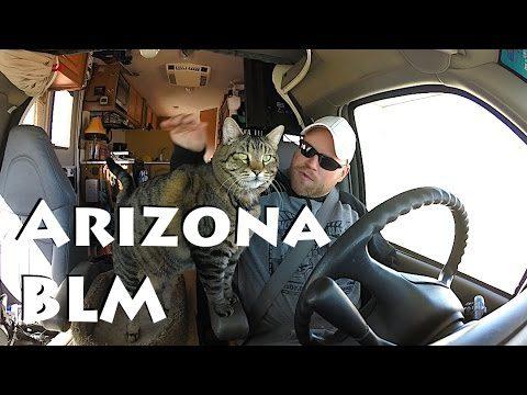 Arizona Desert Already ~ Getting Settled
