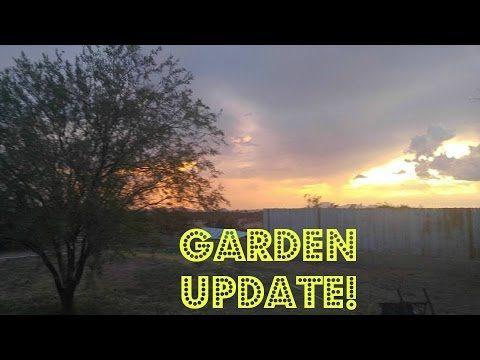 Last desert backyard garden tour for awhile
