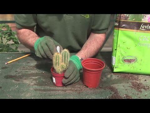 How To Grow A Cactus Plant