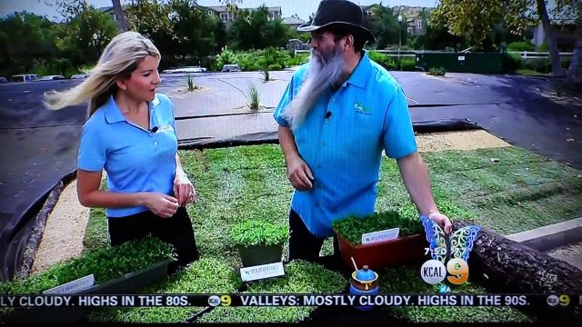 KCAL9 News inTHEGarden covers Kurapia on drought tolerant