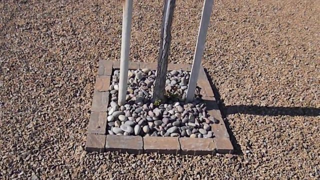 Xeriscape Design and Installation Failure