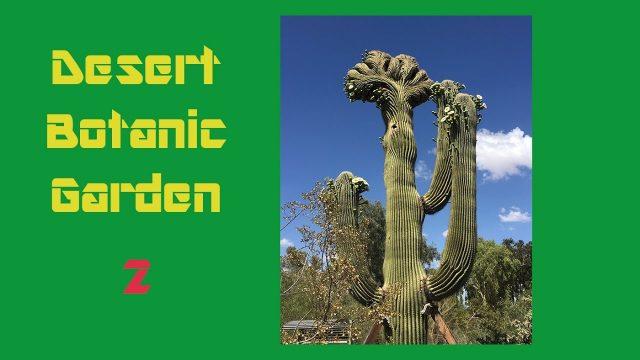 Desert Botanical Garden 2  沙漠植物园 第二集  Arizona Phoenix