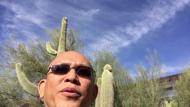 ต้นกระบองเพชรยักษ์ Saguaro ที่สูงมากและอายุมากถึง 200 ปี Desert Botanical Garden Phoenix