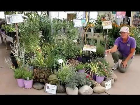 Xeriscape plants for the Northern Colorado