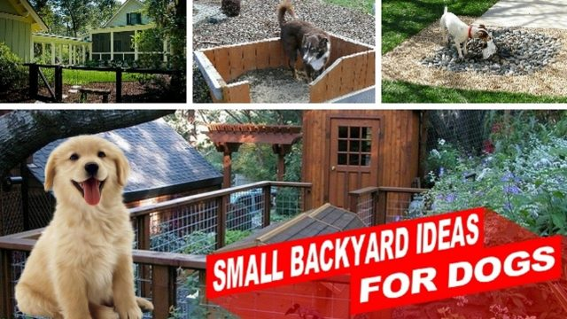 [Amazing] Small Backyard Ideas For Dogs