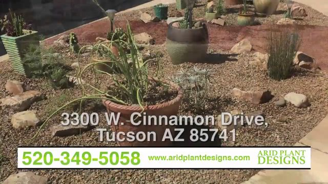Arid Plant Designs | Landscapes, Irrigation Repairs, Renovations, Tree Trimmings | Tucson, AZ