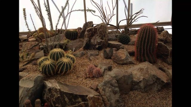 Chihuahuan Desert Nature Center and Botanical Gardens