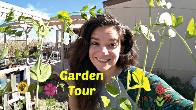 Garden tour post trip! Overdue update! Desert Gardening, Back to Eden style
