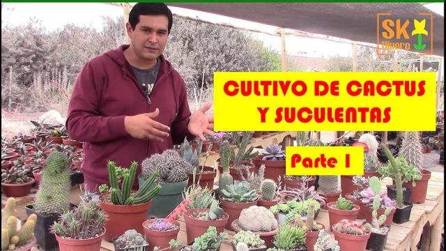 SK Vivero. Cultivo de Cactus y Plantas suculentas. Parte 1