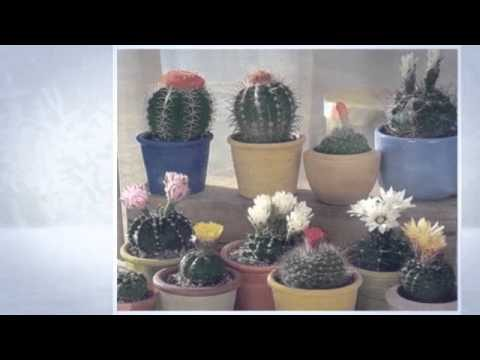 Popular Videos – Cactus & Flower
