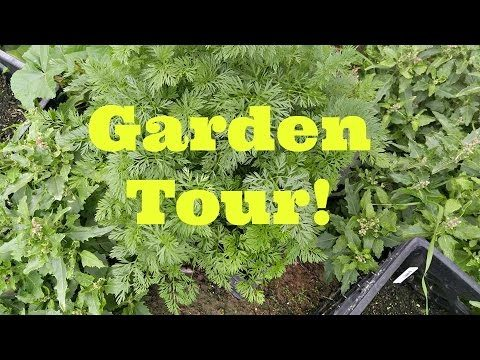 Post-trip desert gardening tour in Arizona! Container gardening