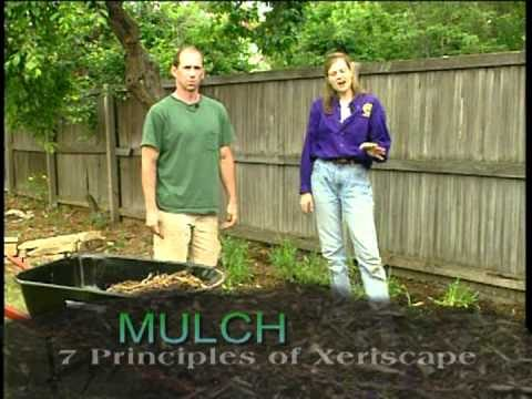 Intro to Xeriscape