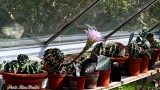 My Fiance Hans's INCREDIBLE Cacti & Succulent & Houseplant collection
