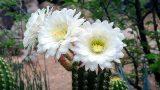 Have You Ever Seen the Beauty of Desert Flowers   Then Visit Desert Botanical Garden, Phoenix, USA