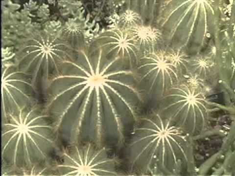 Plants in the Desert