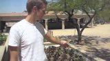 Sunny Arizona – Raised Bed Garden 720 SQ FEET