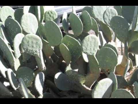 PTerrys Strange Cactus