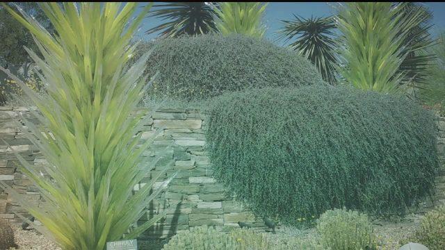 Desert botanical gardens in Phoenix