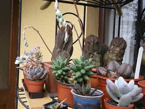 My Cacti & Succulent Plants end of April Update