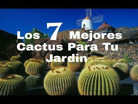Los 7 Mejores Cactus Para Tu Jardin