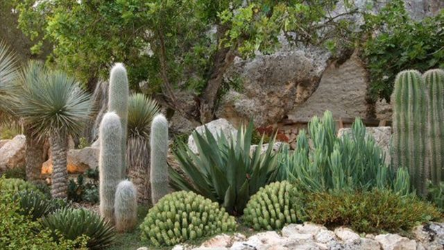 Right Way To Plan Desert Landscaping- Suitable Plants – Butterfly Beauty