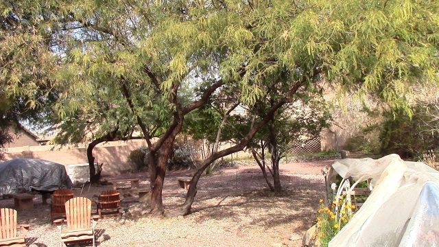 A Tour of an Arizona Backyard Garden and Wildlife Oasis – Presented by OneHeartFire