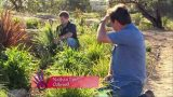 Creating a Low Maintenance Drought Tolerant Garden | Lomandra, Dianella and Phormium