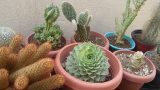 Cactus y Suculentas Verano 2017