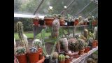 Our Cacti & Succulent Plant end of June Update