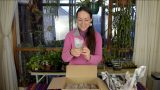 Succulent Plants Unboxing from Green Growers Glasgow – My Review