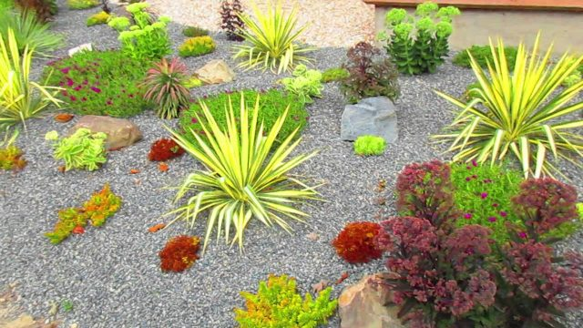 Desert Garden on Salt Spring Island