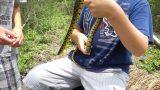 Desert King Snake on the Farm