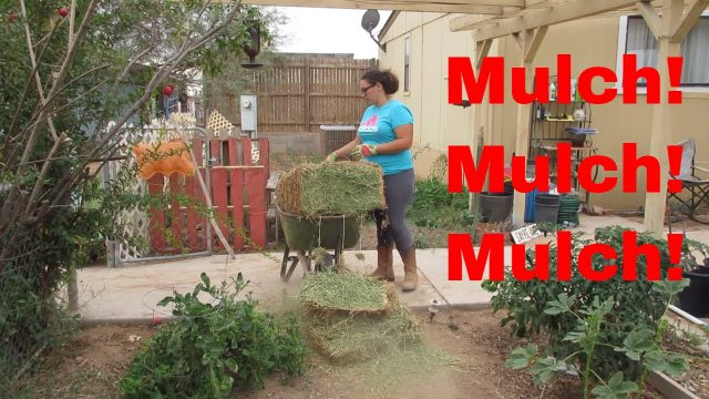 How I apply deep mulch : Back To Eden garden : low desert (Arizona)