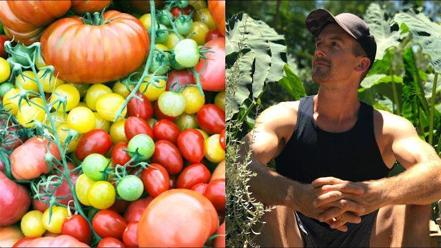 Growing Tomatoes in My Backyard Garden in the Desert…AMAZING!