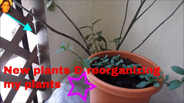 New plants & reorganizing my plants