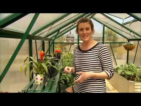 The Garden Gurus – Great Greenhouses in Your Garden