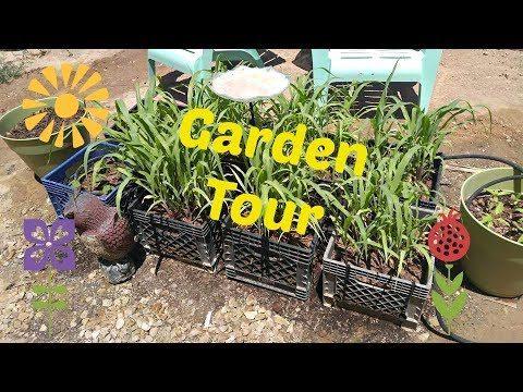 Post trip Garden Tour – Urban Gardening – Desert Gardening