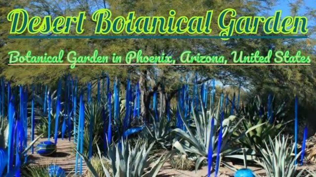 Visiting Desert Botanical Garden, Botanical Garden in Phoenix, Arizona, United States