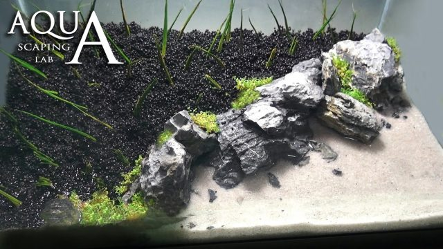 "Aquascaping Lab – Tutorial Iwagumi Aquarium ""Desert Island Beach"" (size 40x25x25H 25L) rocks plants"