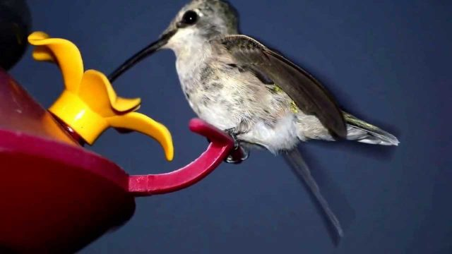 High Desert Hummingbirds