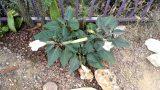 Tucson home desert garden tour 5 min.