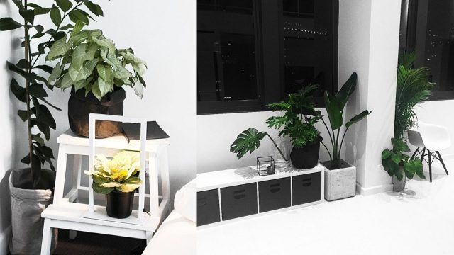 My Favourite Indoor Plants [+TIPS] // Rachel Aust